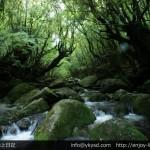 屋久島の世界遺産「縄文杉」と通称「もののけ姫の森」の旅行記(2012年5月)